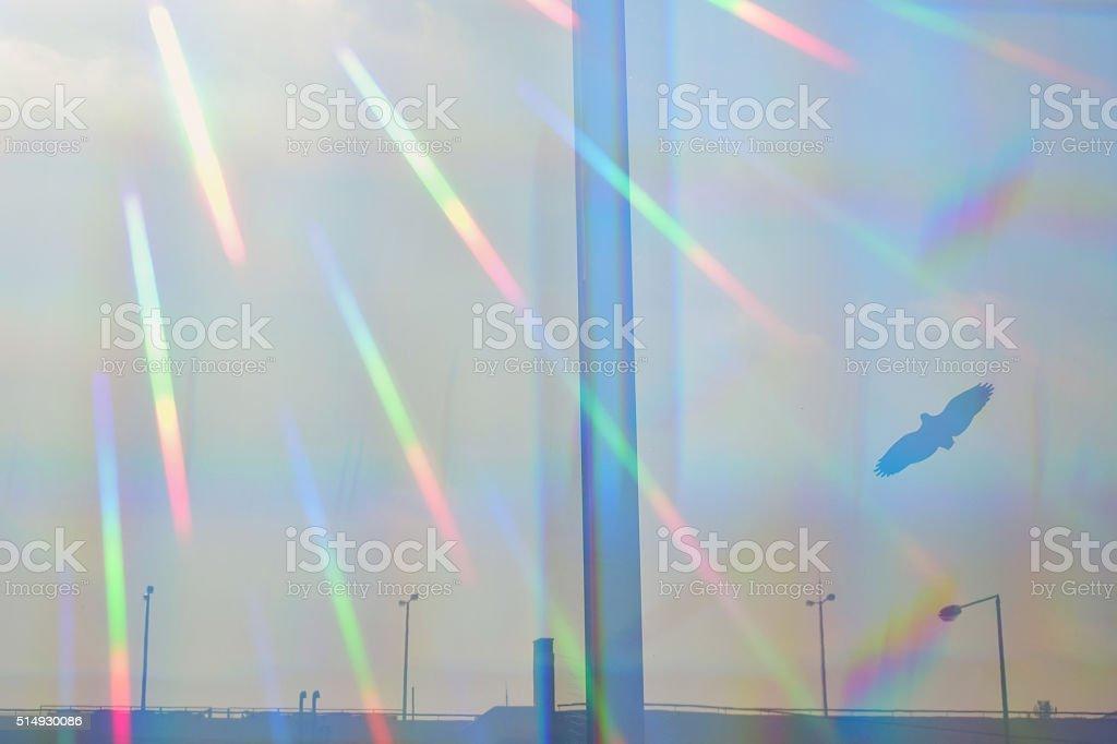 prismatic light flying bird stock photo