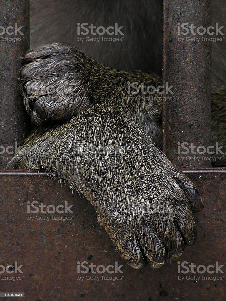 Prison - monkey stock photo