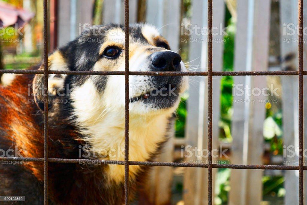 Prisoner dog stock photo