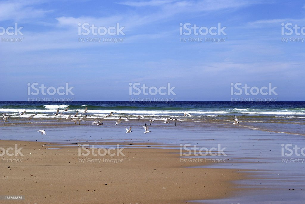 Pristine Beach with Seagulls stock photo