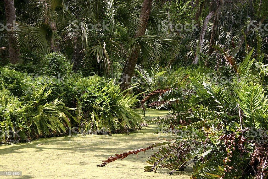 Pristine Florida stock photo