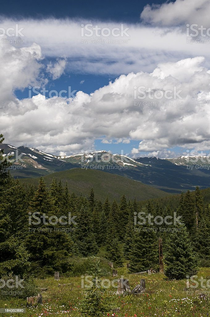 Pristine Pine Forest in the Rocky Mountains stock photo