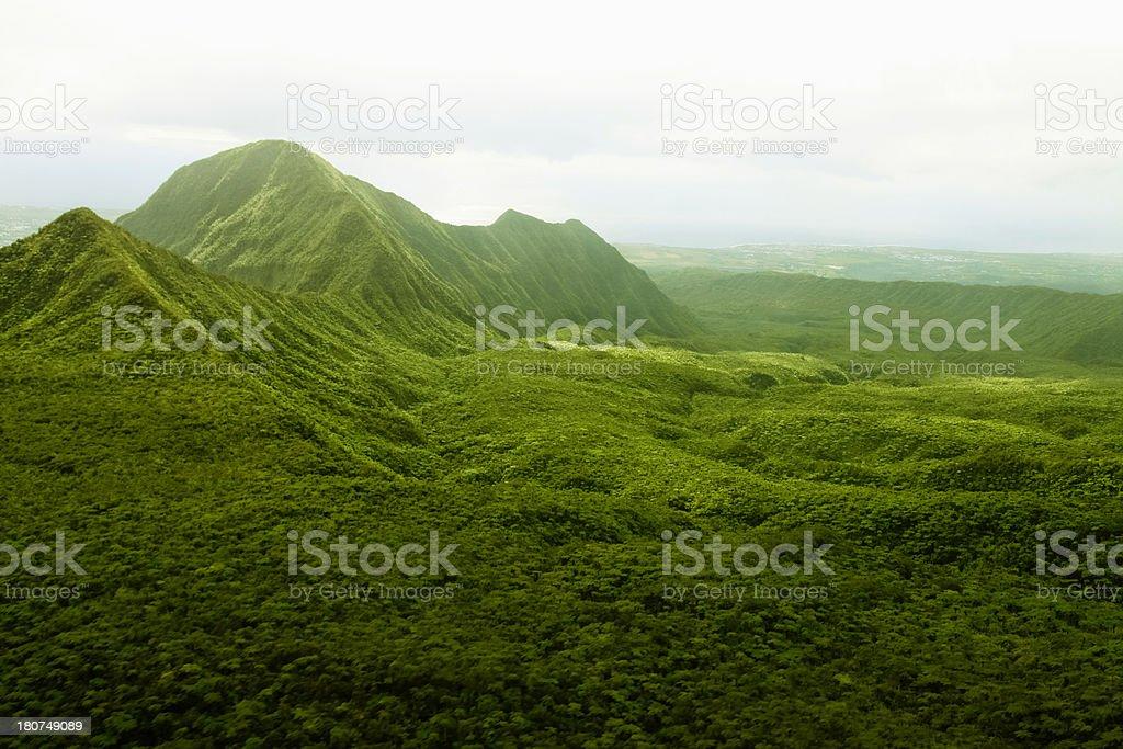Pristine Rainforest,Reunion Island, East Africa, Indian Ocean. stock photo