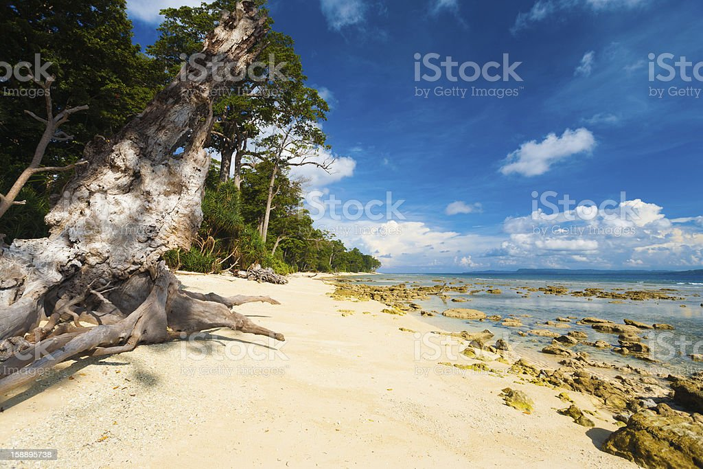 Pristine Undeveloped Sand Beach Forest Low Tide stock photo