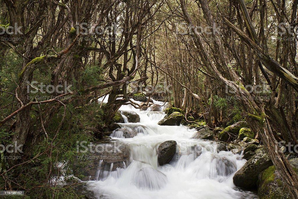 Pristine Upland Stream stock photo