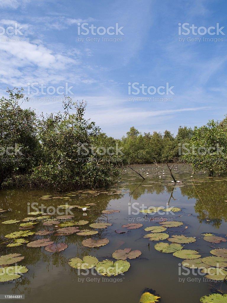 Pristine wetlands royalty-free stock photo