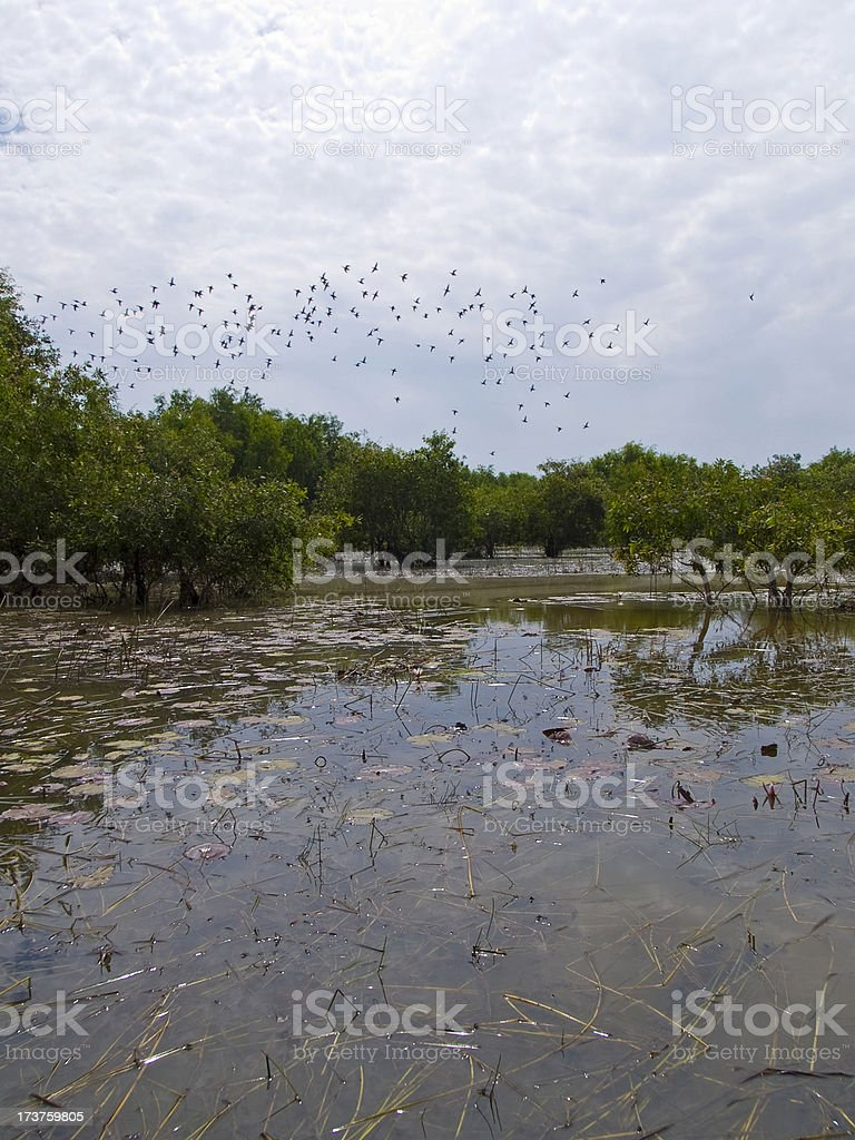 Pristine wetlands royalty-free stock photo