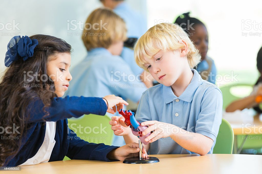 Private elementary school students studying human heart during science class stock photo