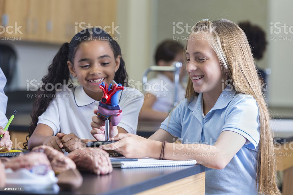 Private school students using heart model during science class stock photo