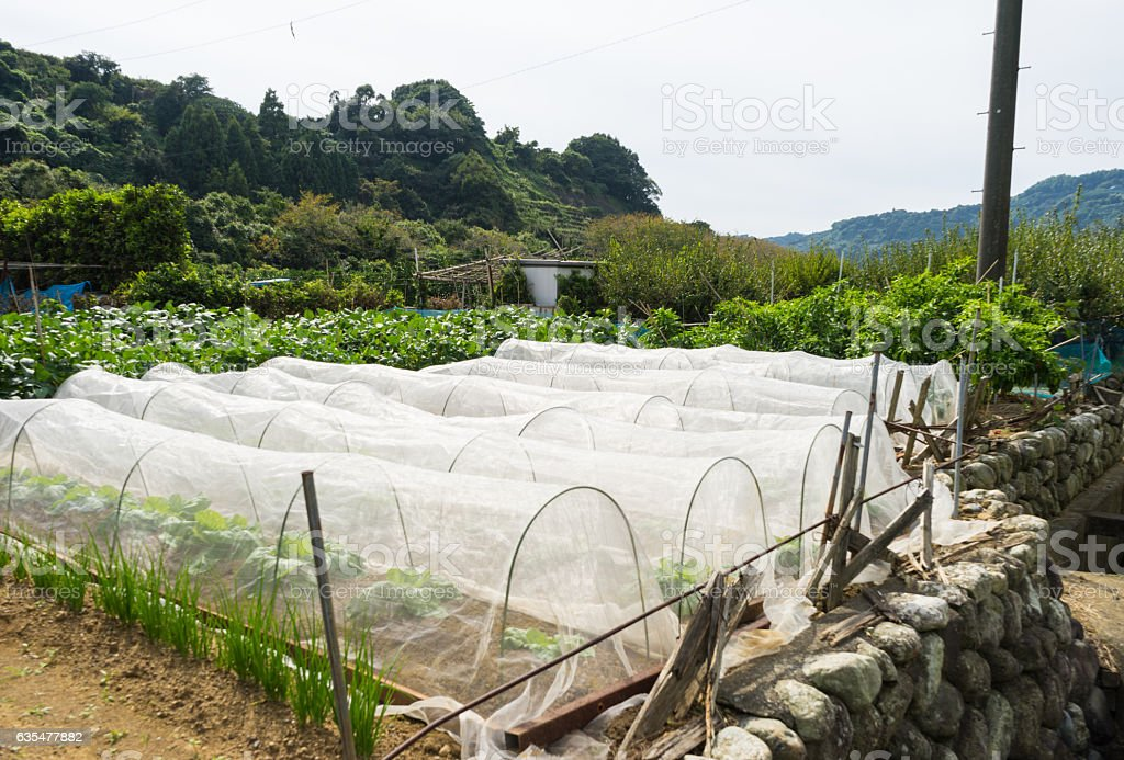 Private vegetable garden stock photo