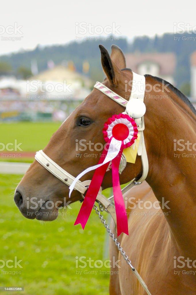 Prize winner stock photo