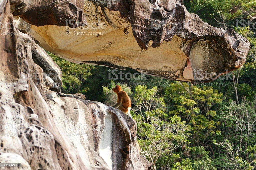 Proboscis Cliff stock photo