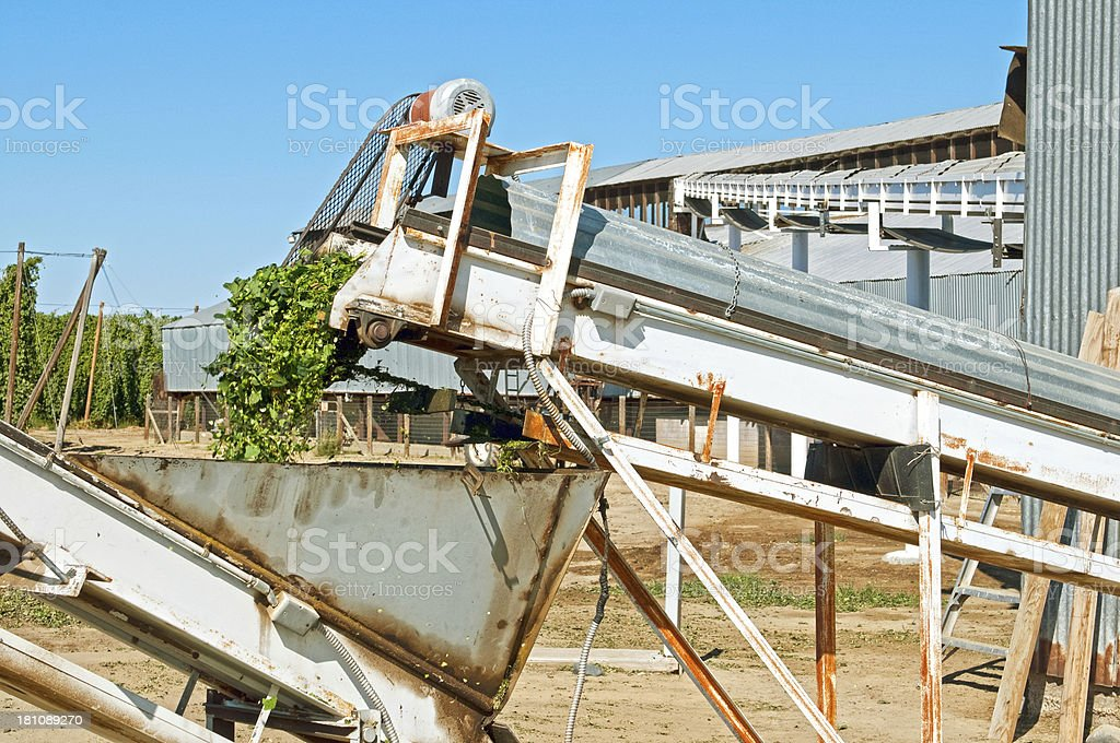 Processed hops' waste on conveyor belt at processing plant royalty-free stock photo