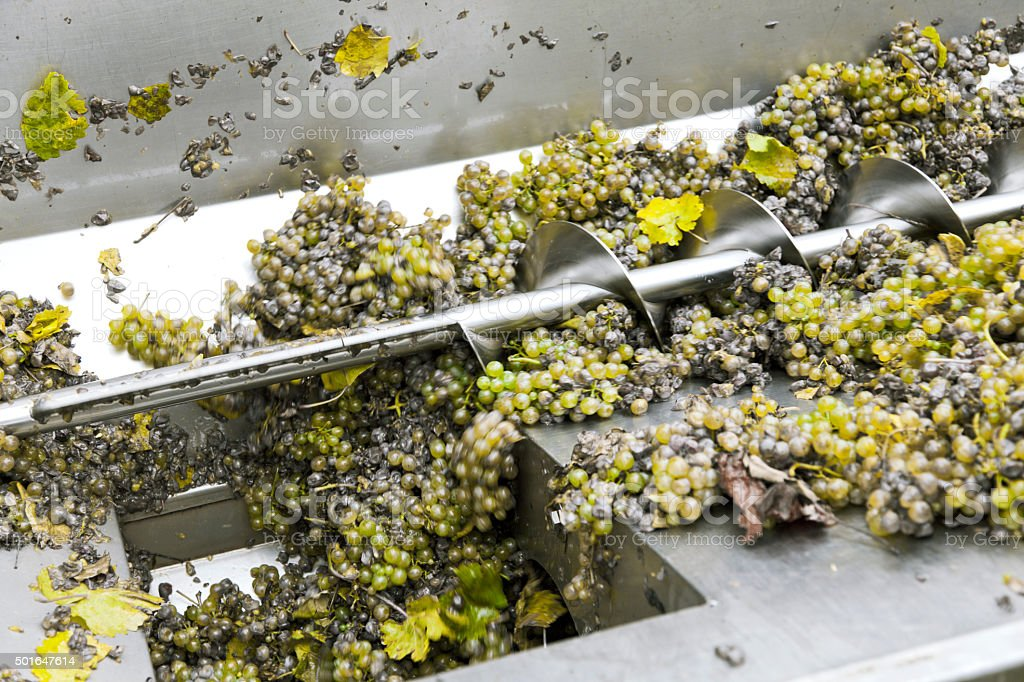 Processing of grape wine in winery stock photo