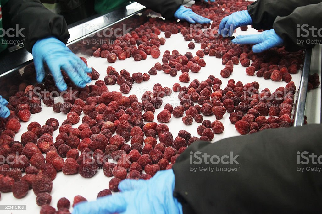 Processing of strawberries stock photo