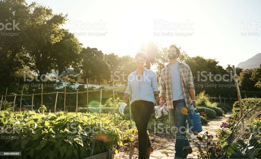 Producing a high quality harvest through sustainable farming practices stock photo