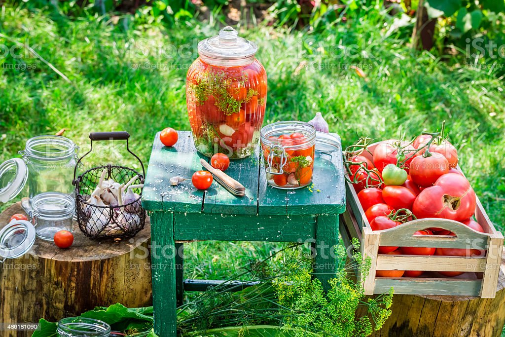 Production of canned tomatoes in summer stock photo