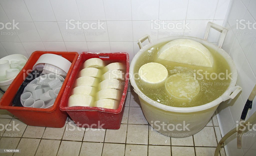 production of cheese and fresh caciotta in various forms stock photo