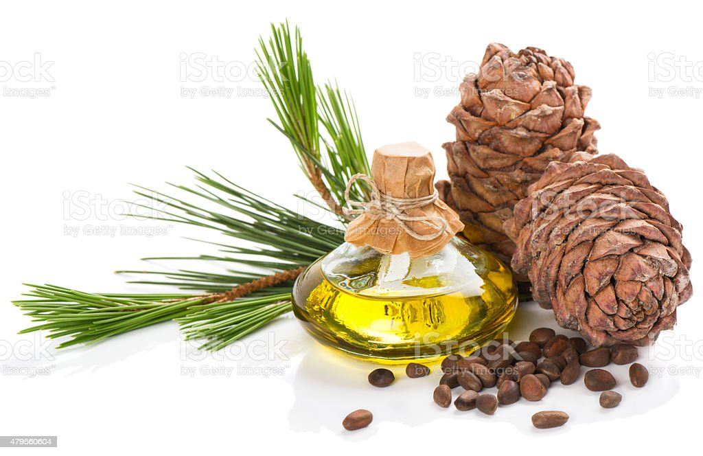 Products of cedar tree. stock photo