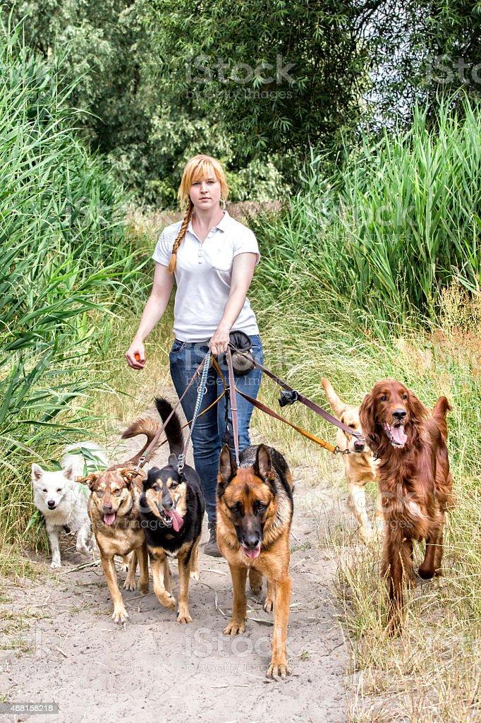 Professional dog walking stock photo