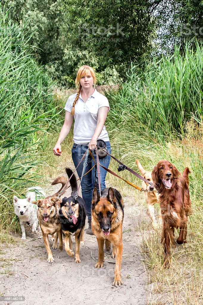Professional dog walking stock photo