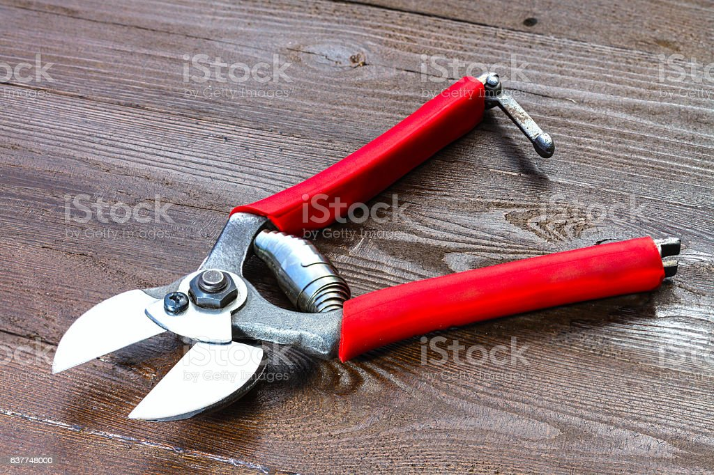 professional garden secateurs stock photo