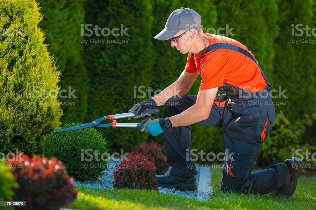 Professional Gardener at Work stock photo
