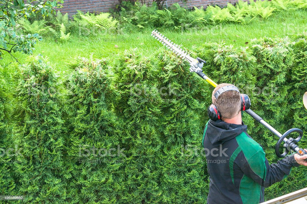 Professional hedges cutting stock photo