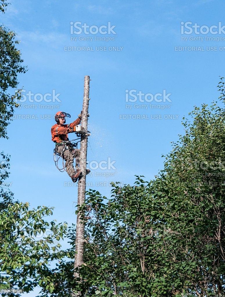 Professional lumberjack cutting tree on the top stock photo