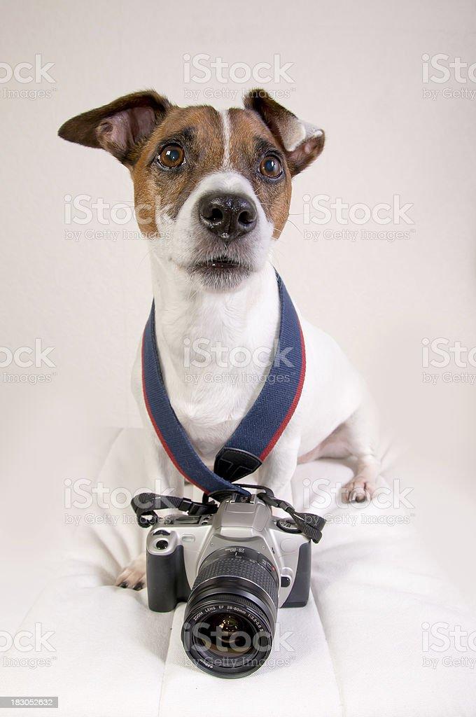 Professional Photographer Dog stock photo