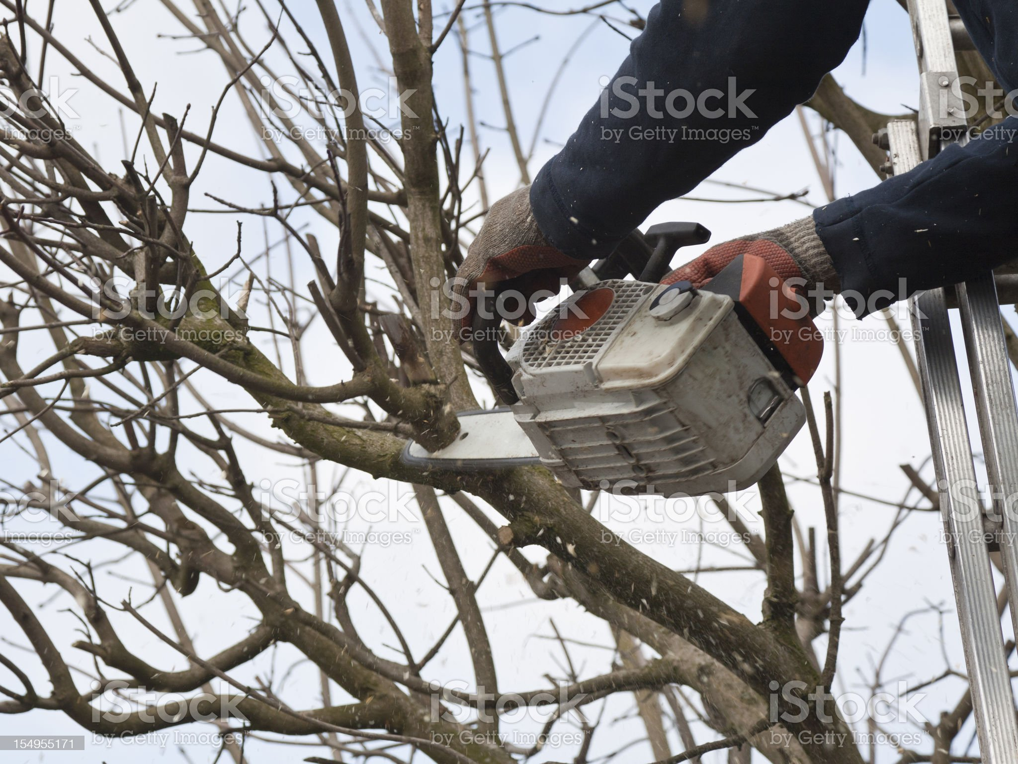 Professional pruning a tree royalty-free stock photo