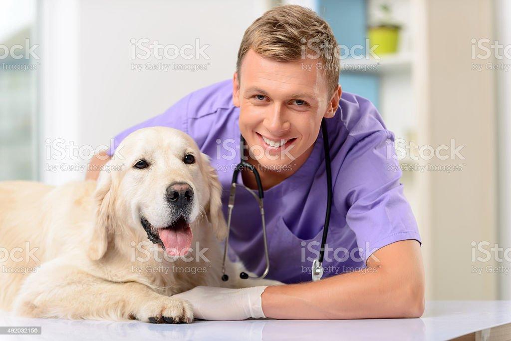Professional vet examining a dog stock photo