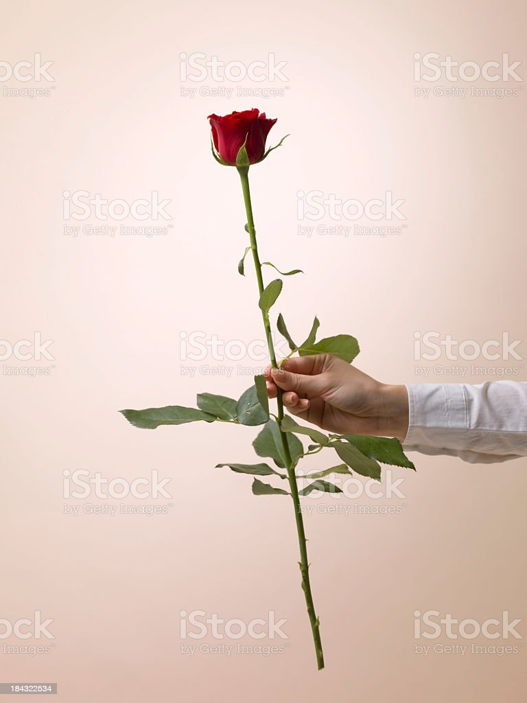 Proffer roses stock photo