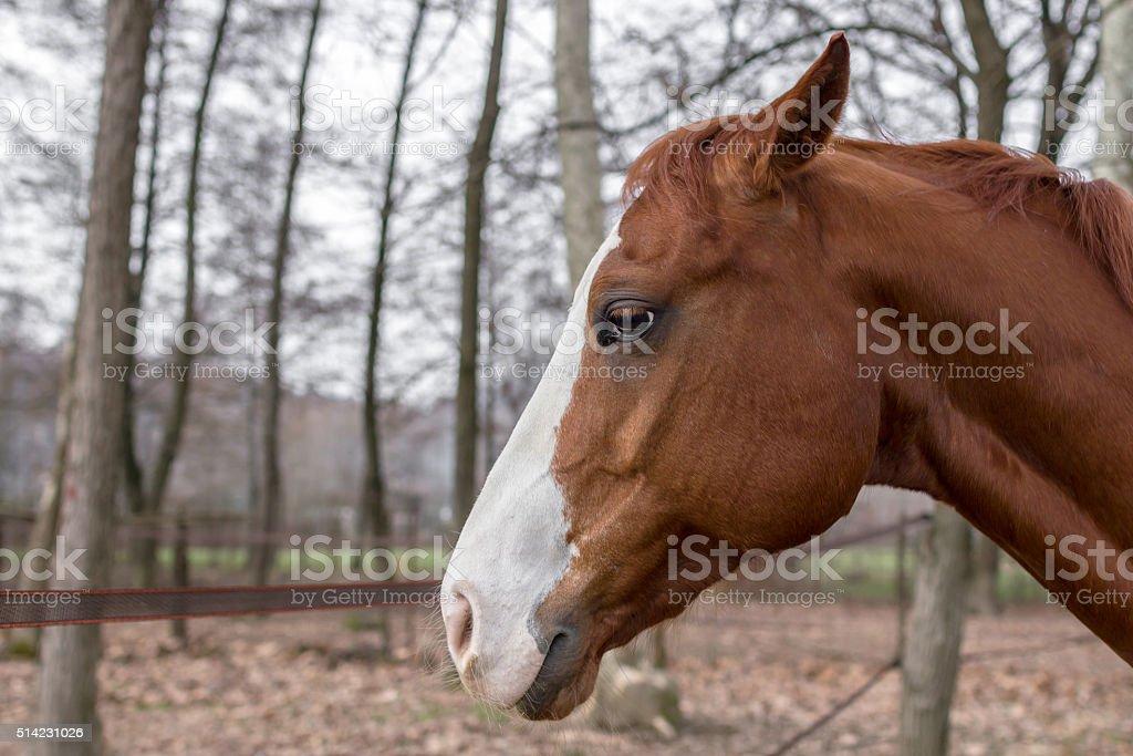 Profile of a horse stock photo