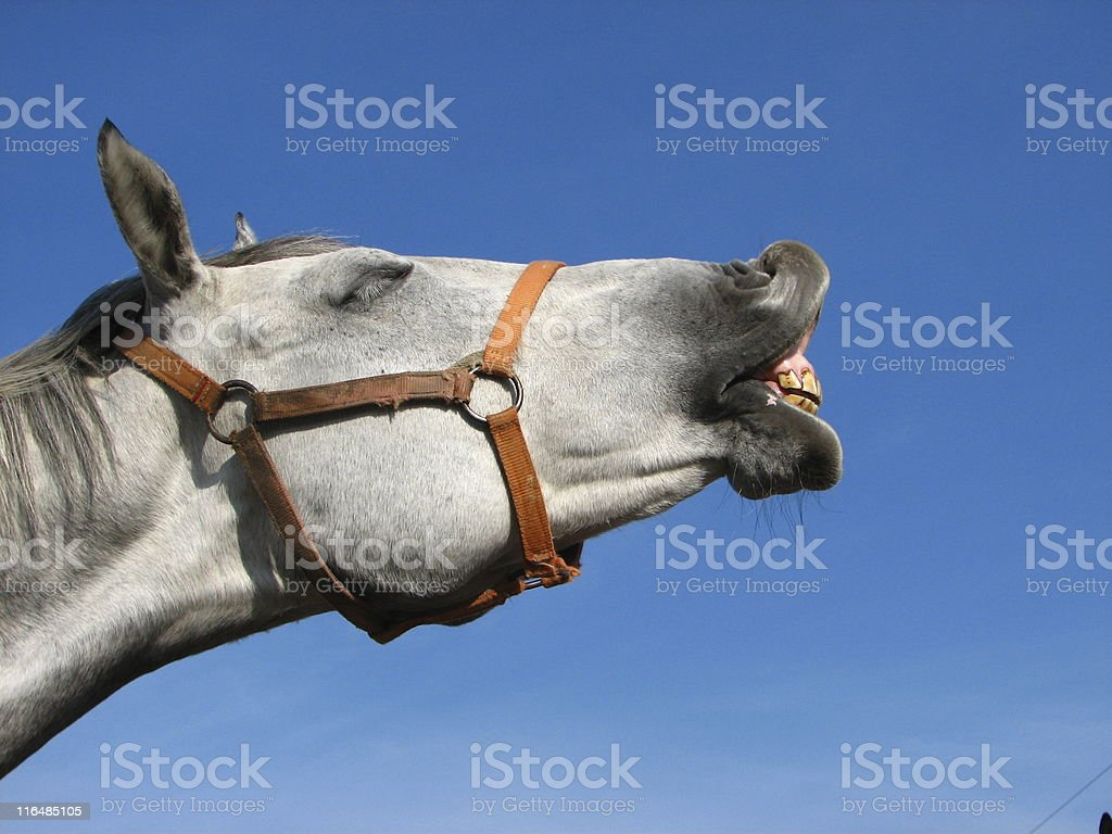 Profile of neighing horse on blue sky background stock photo