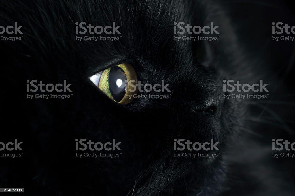 Profile of pretty black cat stock photo