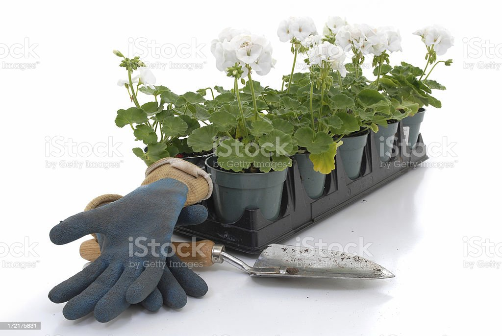 'Project dirt' royalty-free stock photo