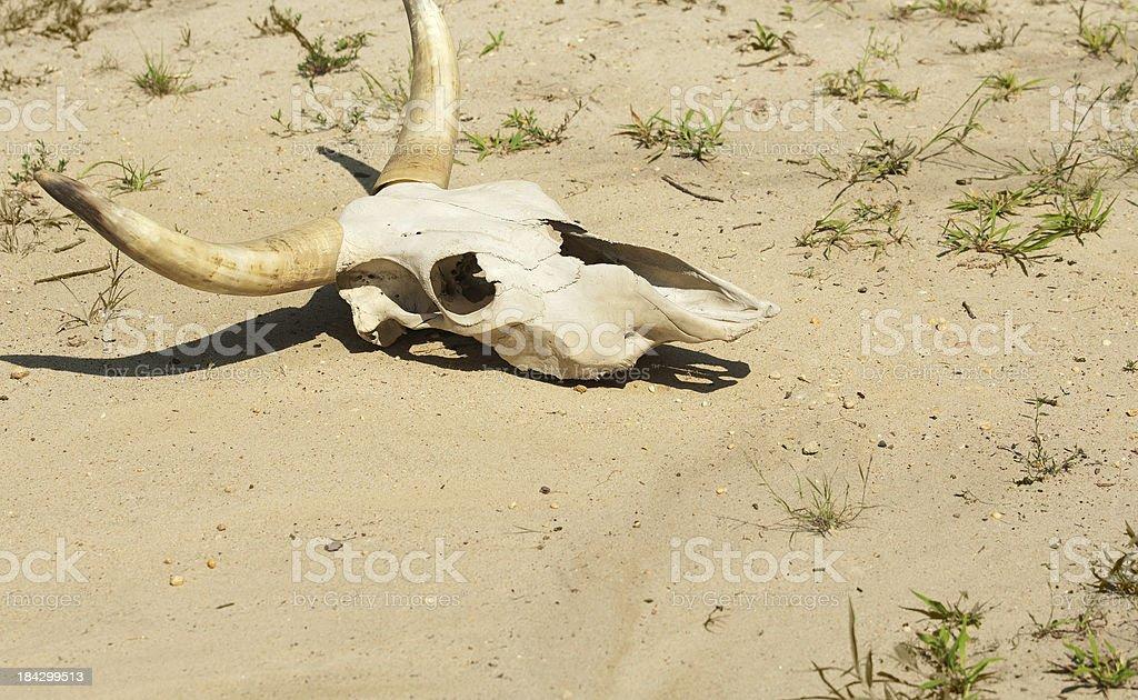 Prolonged Drought Kills stock photo