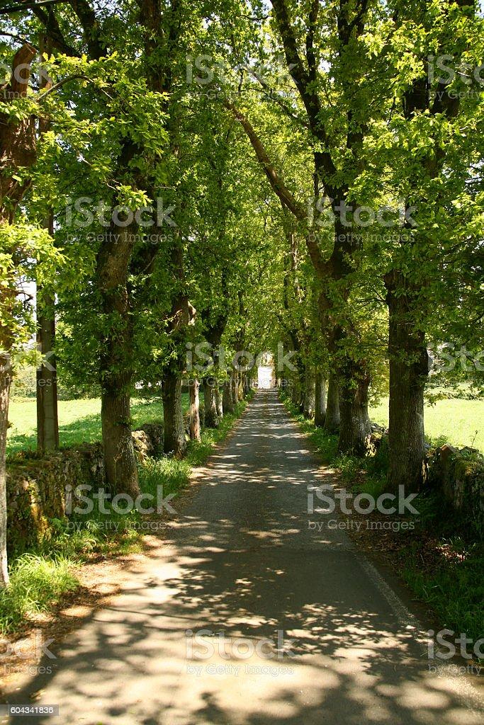 Promenade of Trees stock photo