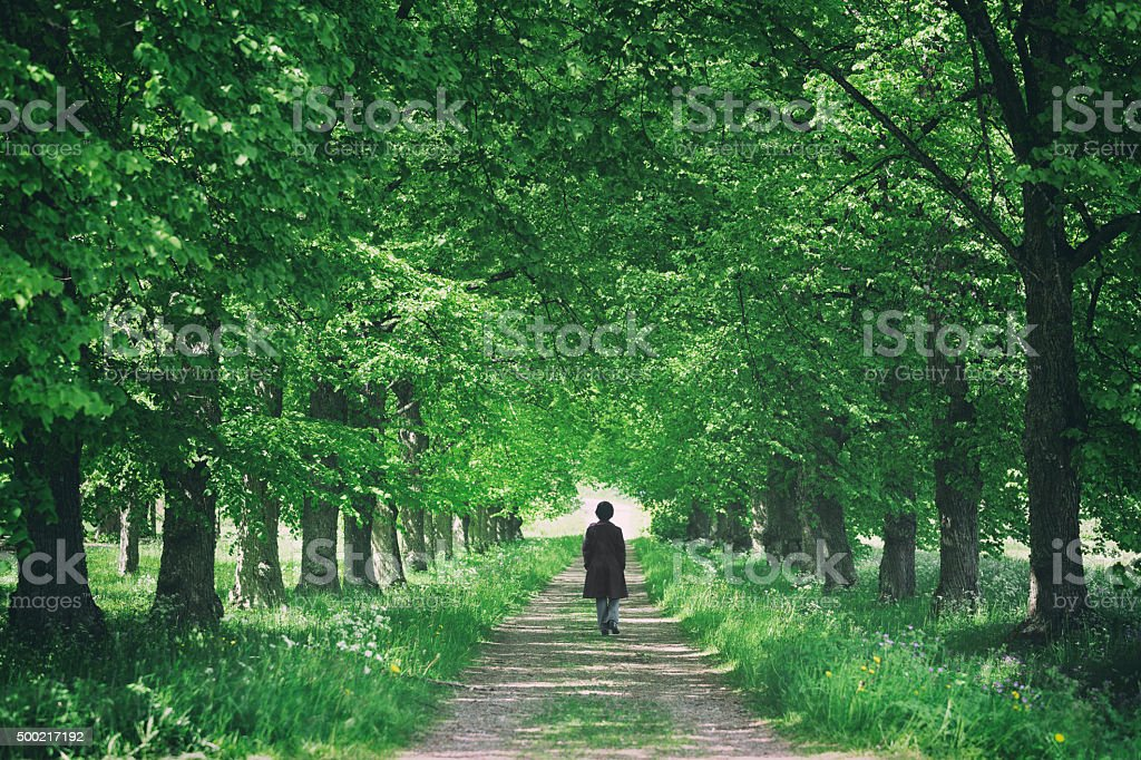 Promenade through trees stock photo