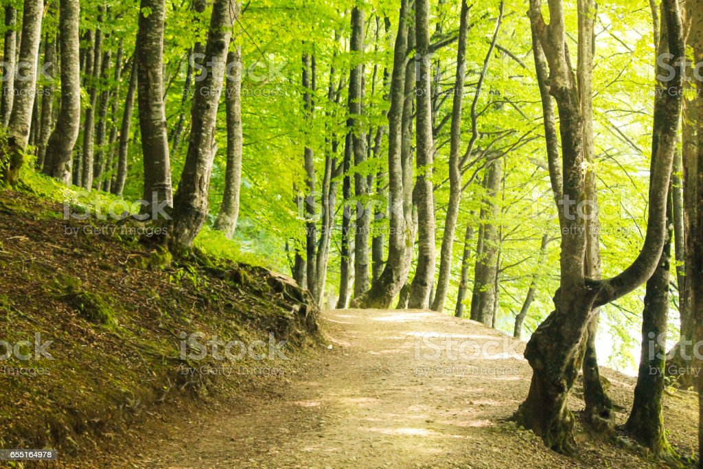 Promenade through trees stock photo