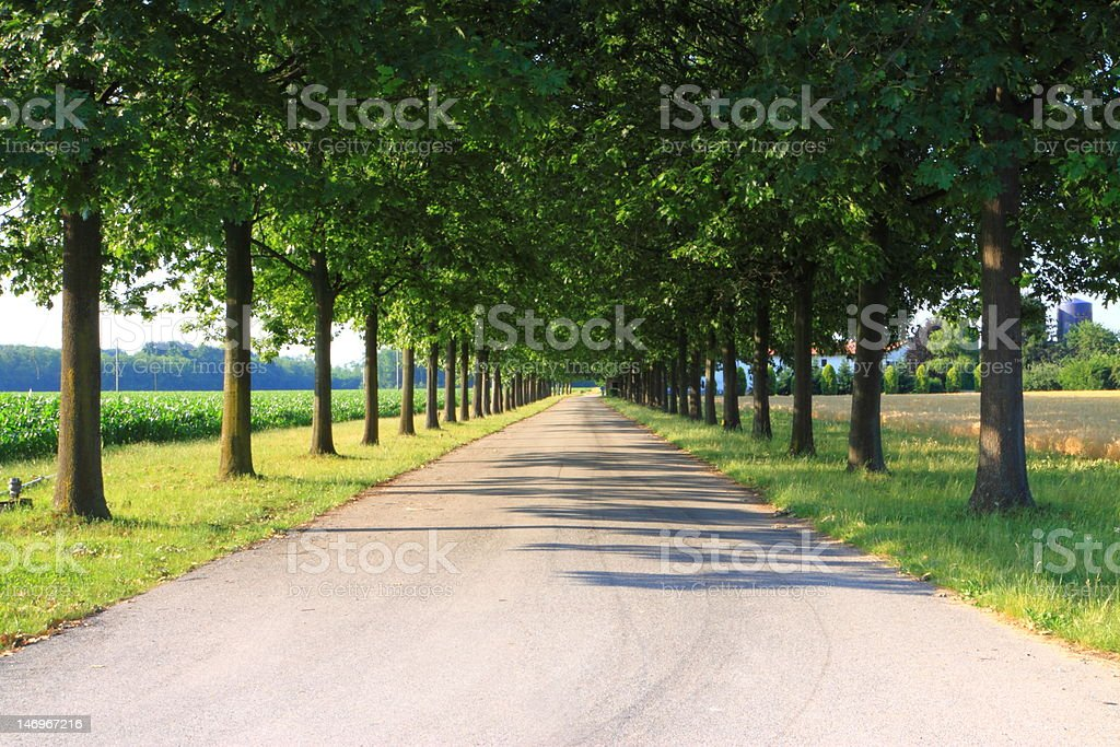 promenade tree-lined  on summer royalty-free stock photo