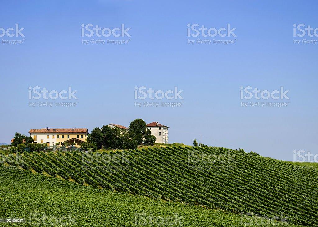 Prosecco hill stock photo