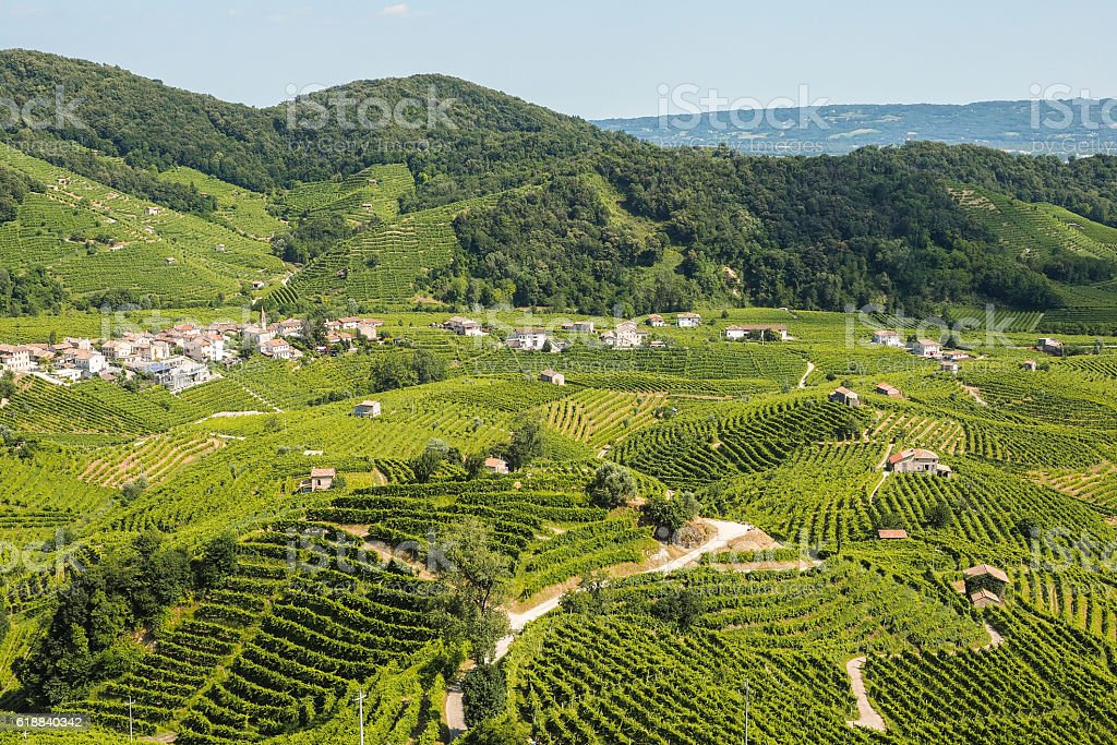 Prosecco vineyards in Valdobbiadene town stock photo