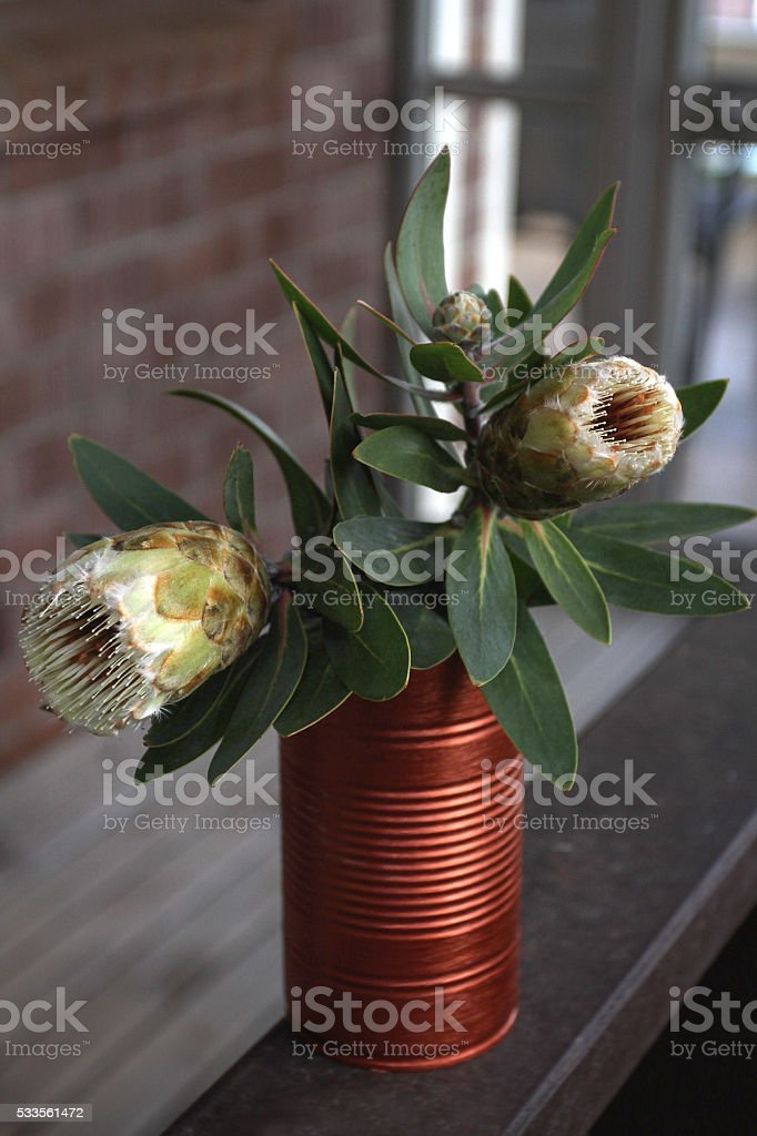 Protea in a can stock photo