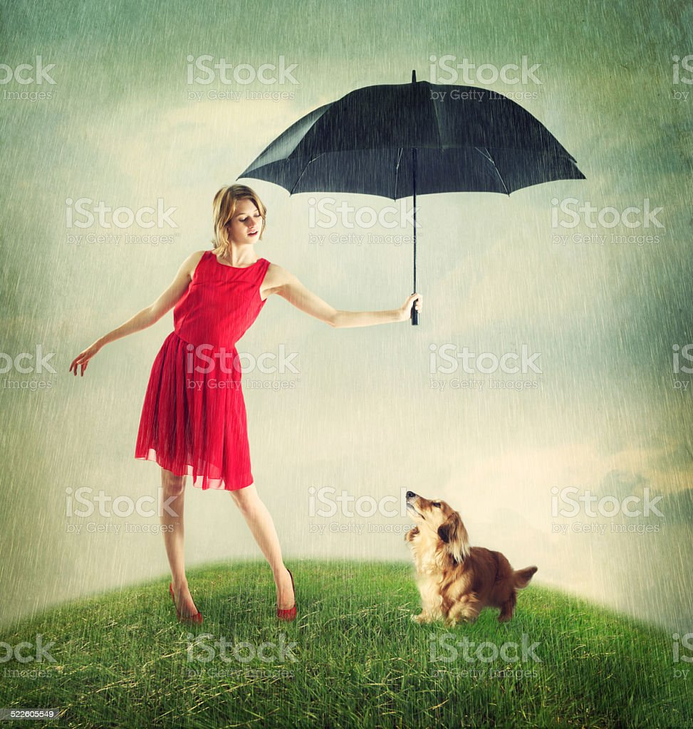 Proteching a Dachshund from the Rain stock photo