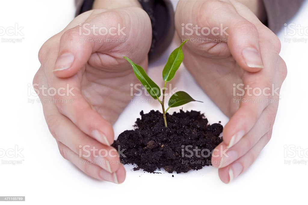 Protect plant royalty-free stock photo