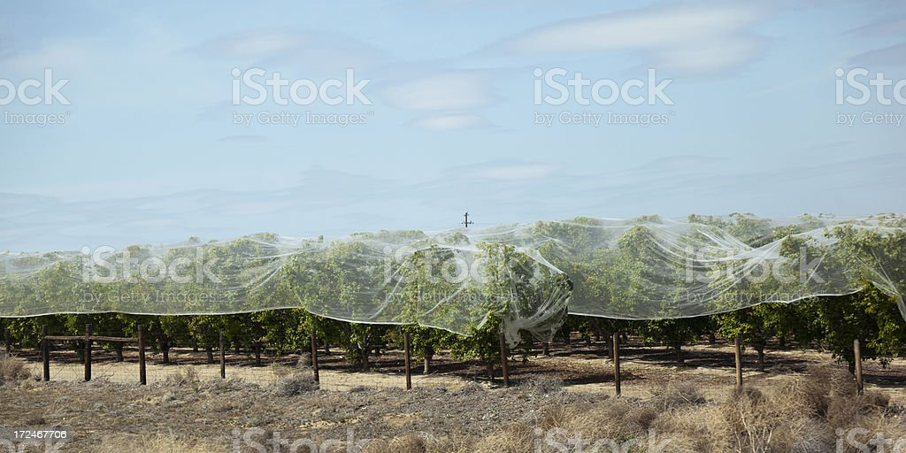 Protected Orchard royalty-free stock photo