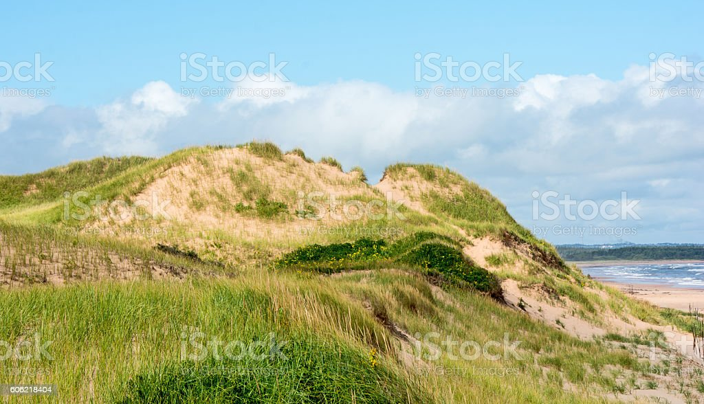Protected sand dunes at Prince Edward Island National Park, Canada stock photo