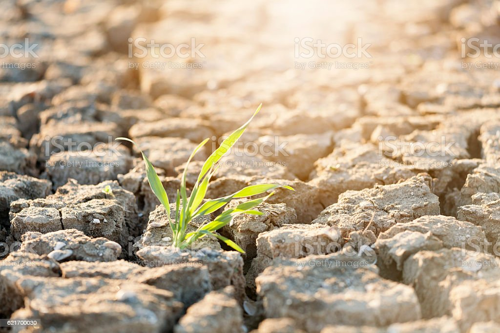 Protecting nature / Love nature stock photo